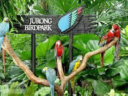Jurong Bird Park Tour