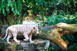 Singapore Zoo Tour Packages